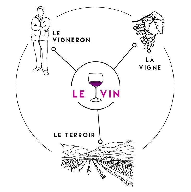 Le vin selon Vinothentis