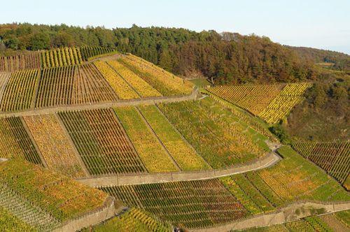 Vinothentis - Parcelles de vignes