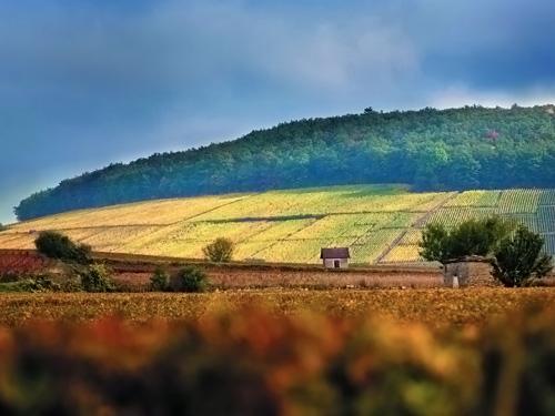 Vinothentis - Parcelles de vignes 2